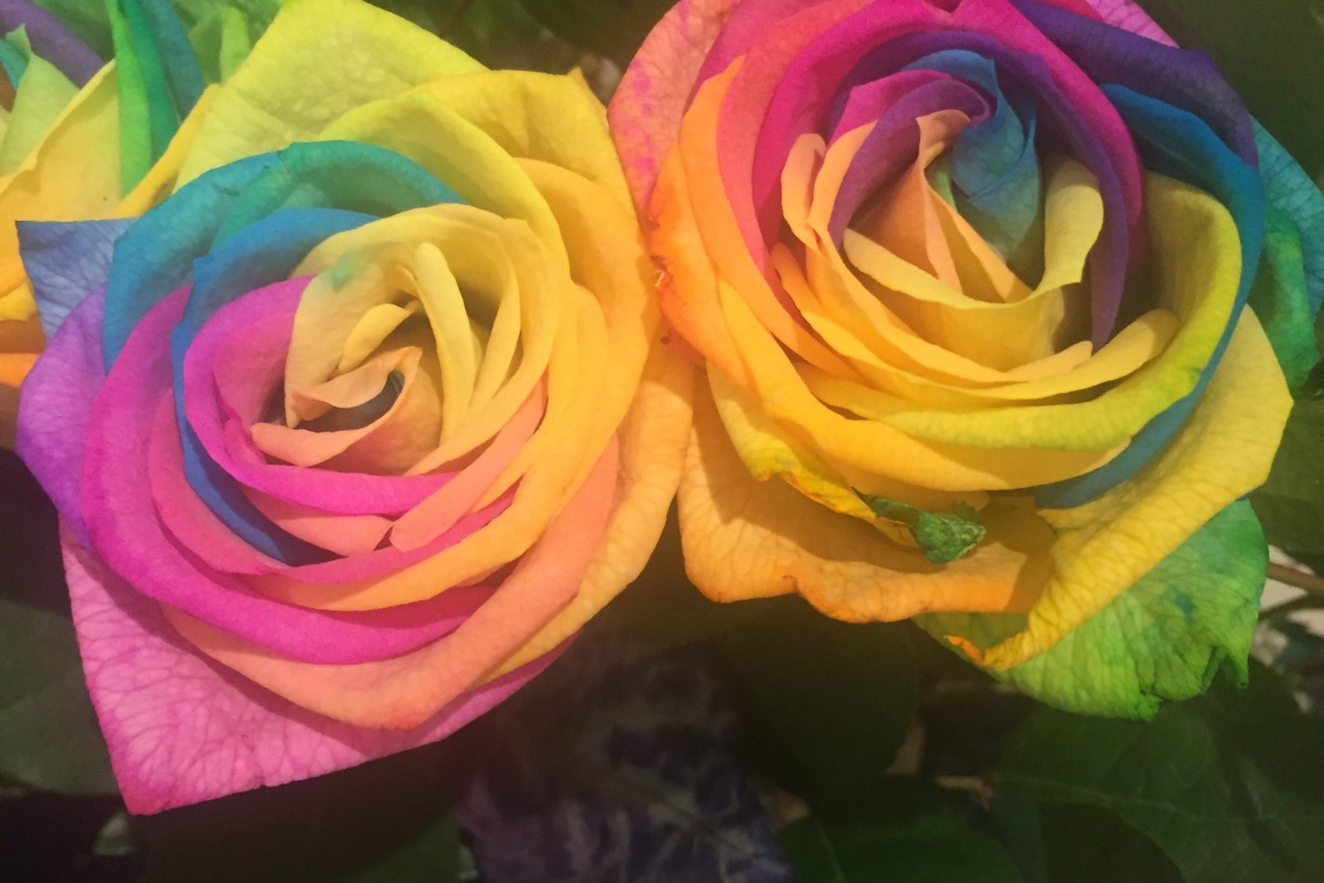 Rainbow Roses Cocochlo Blog